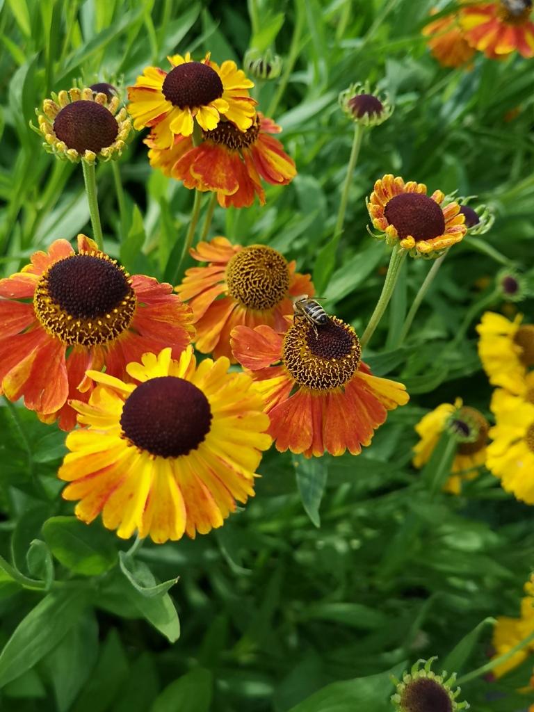 utrecht_botanicgarden_36